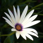 all thinwhite flower avatar 2x2