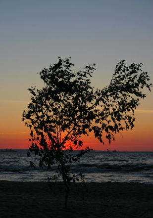 lonely sunset tree